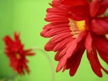 Flor roja falsa Foto de archivo libre de regalías