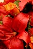 Flor roja grande Foto de archivo