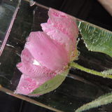 Flor roja grande con las burbujas del agua en un florero de vidrio Fotografía de archivo