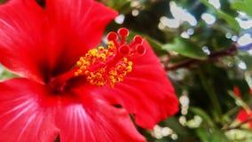 Flor roja hermosa Fotografía de archivo