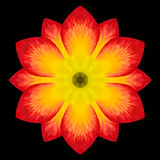 Flor roja Mandala Kaleidoscope Isolated en negro fotografía de archivo