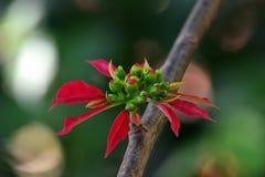 Flor roja sola Fotos de archivo