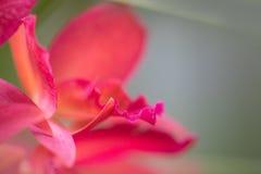Flor roja suave Fotografía de archivo