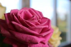 Flor roja y amarilla fotos de archivo