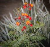 Flor roja y amarilla por el río Foto de archivo