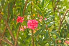 Flor roja y hoja verde Foto de archivo