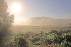 Flor rojo de las amapolas de las flores en campo Imagen de archivo