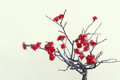 Flor rojo del ciruelo imagen de archivo
