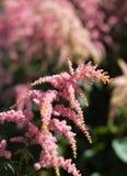 Flor rosada imagen de archivo