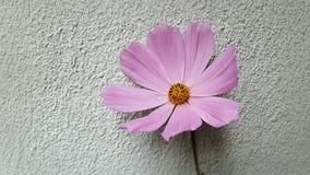 Flor rosada foto de archivo