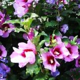 Flor rosada imágenes de archivo libres de regalías