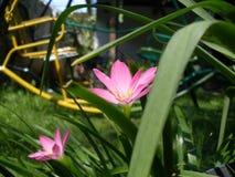 Flor rosada Fotos de archivo