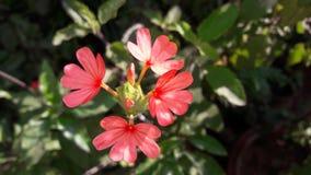 Flor rosada bonita en un jardín foto de archivo libre de regalías