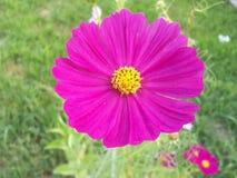 Flor rosada brillante Imagenes de archivo