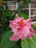 Flor rosada brillante Foto de archivo