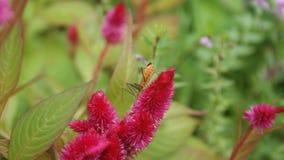Flor rosada con el insecto anaranjado Imagenes de archivo