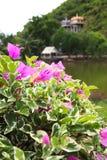 Flor rosada con el templo Fotos de archivo