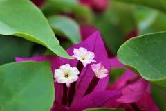 Flor rosada con la hoja Fotos de archivo
