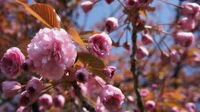 Flor rosada con las hojas Fotos de archivo