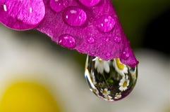 Flor rosada con una gotita de agua Fotos de archivo libres de regalías