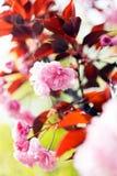 Flor rosada de la abstracción Imágenes de archivo libres de regalías