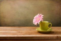 Flor rosada de la margarita en taza verde Imagen de archivo
