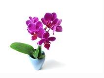 Flor rosada de la orquídea foto de archivo libre de regalías