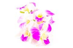 Flor rosada de la orquídea Fotografía de archivo libre de regalías