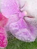 Flor rosada de la orquídea Imagen de archivo libre de regalías