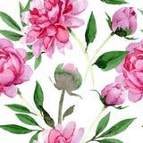 flor rosada de la peonía de la acuarela Flor botánica floral Modelo inconsútil del fondo Fotografía de archivo libre de regalías