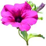 Flor rosada de la petunia Fotografía de archivo