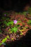 Flor rosada de la primavera en la luz del sol Imagen de archivo
