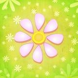 Flor rosada de la primavera sobre fondo verde con las flores blancas Fotografía de archivo