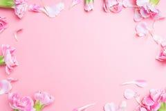 flor rosada de los claveles para en el rosa Foto de archivo