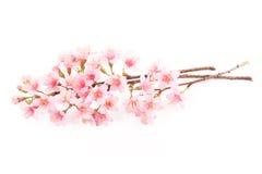 Flor rosada de sakura Imagenes de archivo