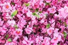 Flor rosada de sakura Fotos de archivo