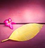 Flor rosada del árbol de templo o de Pumeria con la hoja amarilla en la madera imagen de archivo libre de regalías