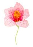 Flor rosada del primer Fotos de archivo libres de regalías