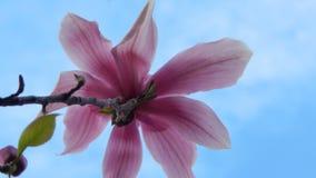 Flor rosada 1 del verano Imagen de archivo libre de regalías