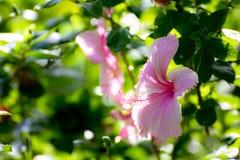 Flor rosada del zapato Foto de archivo