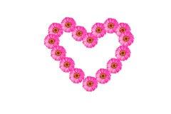 Flor rosada del zinnia del corazón Fotos de archivo