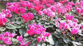Flor rosada en el campo Imagenes de archivo