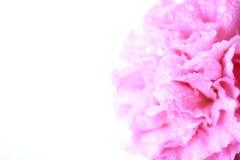Flor rosada en el estilo suave del color - imagen común Foto de archivo libre de regalías