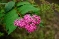 Flor rosada en el jardín Imágenes de archivo libres de regalías