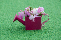 Flor rosada en el tanque Fotos de archivo libres de regalías