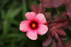 Flor rosada en jardín fotos de archivo libres de regalías