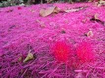 Flor rosada en jardín Fotografía de archivo libre de regalías