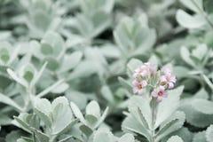 Flor rosada en jardín Foto de archivo libre de regalías