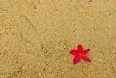Flor rosada en la arena de la playa Fotos de archivo