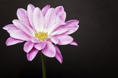 Flor rosada en lado izquierdo Fotos de archivo libres de regalías
